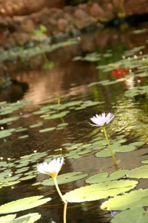 ホテルの近くの池