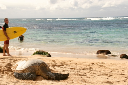 海がめちゃんとサーファーさん
