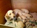 6匹の赤ちゃん!!